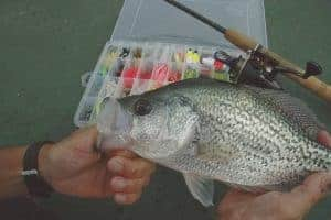 Caught crappie with tackle box