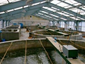 Fish hatchery tanks