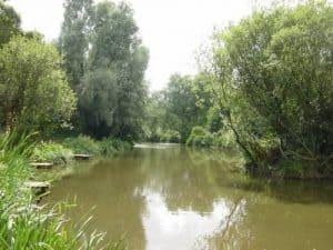 Slow stream with trees surrounding it